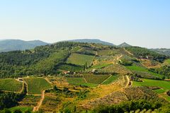 Chianti Region. Hill Of Tuscany With Vineyard In The Chianti Region stock photo