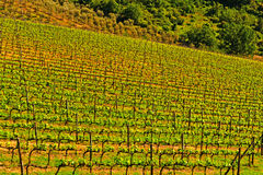 Chianti Region Royalty Free Stock Image