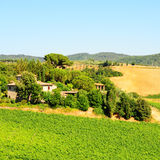 Chianti Region. Hill of Tuscany with Vineyard in the Chianti Region stock image