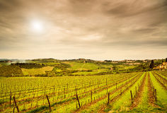 Chianti region, Panzano vineyard, trees and farm on sunset. Tuscany, Italy royalty free stock photography