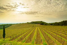 Chianti region, vineyard, trees and farm on sunset. Tuscany, Italy Stock Images