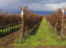 Chianti regionu wzgórza Zdjęcie Royalty Free
