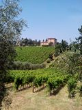 Chianti road. Summertime in the Chianti road stock photography
