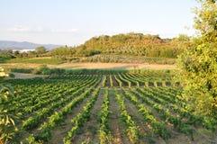 Chianti sanminiato вина Тосканы   Стоковая Фотография