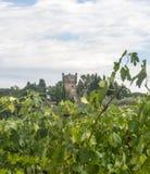Chianti, Toscânia Imagem de Stock Royalty Free