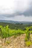 Chianti, Toscana Fotografia Stock
