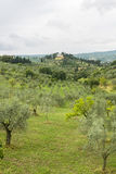 Chianti, Toscana Immagine Stock Libera da Diritti