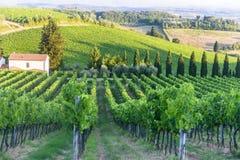 Chianti, Toscana Fotografia Stock Libera da Diritti