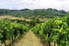 Chianti, Toscanië Stock Foto