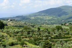 Chianti, Toscanië Stock Fotografie