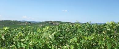 Chianti in Toskana stockbilder