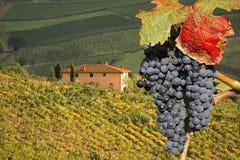 Chianti, Toskana, Italien lizenzfreie stockfotografie