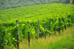 Chianti Tuscan vineyards, Italy  Royalty Free Stock Photography
