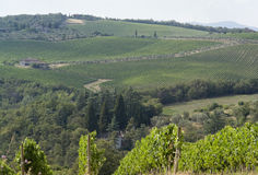 Chianti in Tuscany Royalty Free Stock Image