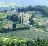 Chianti Tuscany Royaltyfri Fotografi