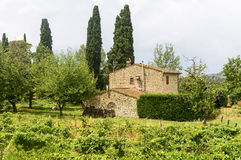 Chianti, Tuscany. Landscape in Chianti (Florence, Tuscany, Italy) with vineyards and cypresses at summer royalty free stock photos