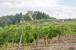 Chianti, Tuscany. Landscape in Chianti (Florence, Tuscany, Italy) with vineyards and olive trees at summer stock photo