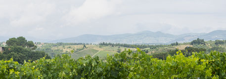 Chianti, Tuscany. Landscape in Chianti (Florence, Tuscany, Italy) with vineyards and olive trees at summer stock images