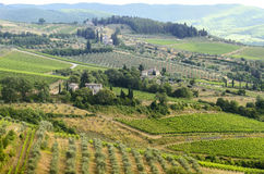 Chianti, Tuscany. Landscape in Chianti (Florence, Tuscany, Italy) with vineyards and olive trees at summer stock image