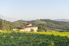 Chianti, Tuscany. Landscape in Chianti (Florence, Tuscany, Italy) with vineyards at summer royalty free stock images