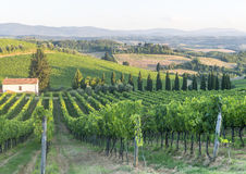 Chianti, Tuscany. Landscape in Chianti (Florence, Tuscany, Italy) with vineyards at summer royalty free stock photos