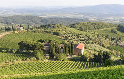Chianti, Tuscany. Landscape in Chianti (Florence, Tuscany, Italy) with vineyards at summer stock photos