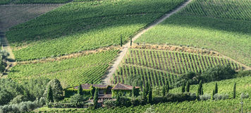 Chianti, Tuscany. Landscape in Chianti (Florence, Tuscany, Italy) with vineyards at summer stock image