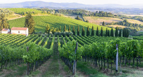Chianti, Tuscany. Landscape in Chianti (Florence, Tuscany, Italy) with vineyards at summer royalty free stock photo