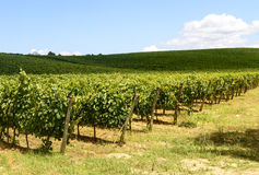 Chianti, Tuscany. Landscape in Chianti (Florence, Tuscany, Italy) with vineyards at summer royalty free stock image