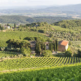 Chianti, Tuscany. Landscape in Chianti (Florence, Tuscany, Italy) with vineyards at summer stock photo