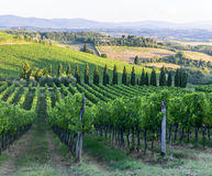 Chianti, Tuscany. Landscape in Chianti (Florence, Tuscany, Italy) with vineyards at summer royalty free stock photography