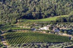 Chianti, Tuscany. Summer landscape in Chianti, Tuscany, Italy. Farm with vineyard royalty free stock photography
