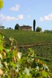 Chianti van de wijngaard, Toscanië, Italië Royalty-vrije Stock Fotografie