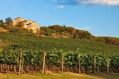 Chianti vineyard. Royalty Free Stock Photography