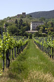 Chianti vineyard. Vineyard in the Chianti with castle in background royalty free stock image