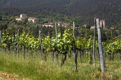 Chianti vineyard Stock Photography