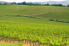 Chianti vineyard landscape in Tuscany stock photography