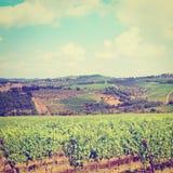 Chianti. Vineyard in the Chianti Region, Instagram Effect royalty free stock image