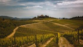Chianti Vineyard Stock Photo