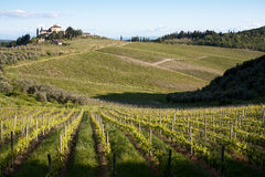 Chianti vineyard slopes. Chianti vineyard in a gentle slope with road and traditional farmhouse in the background stock images