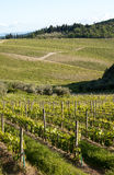 Chianti vineyard slopes. Chianti vineyard in a gentle slope with road and wood in the background Royalty Free Stock Photos