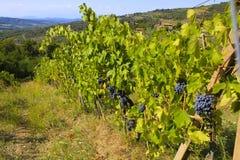 Chianti Vineyards, Italy Royalty Free Stock Photo