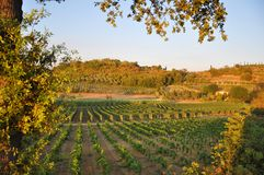Chianti wine near Florence Tuscany. Florence chianti Tuscany Italy for agriculture vineyards and wine growing near the mountains royalty free stock photography