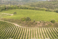 Chianti wine region, Tuscany. Vineyards on the hills of Chianti, in the province of Siena. Tuscany, Italy Royalty Free Stock Photography