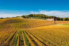 Chianti wine region vineyards, Tuscany. Italy royalty free stock photo
