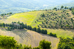 Chiantilandskap nära Radda, med cypressar och olivträd Royaltyfri Fotografi