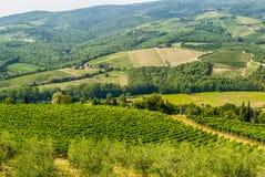 Chiantilandskap nära Radda, med vingårdar och olivträd Arkivbild