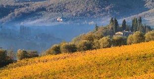 Chiantivingårdlandskap i hösten, Tuscany Royaltyfri Fotografi