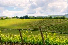 Chiantiweinberglandschaft in Toskana Stockfotos