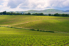 Chiantiweinberglandschaft in Toskana Lizenzfreie Stockbilder